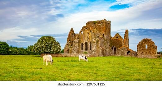 Hore Abbey ancient ruins photo, peaceful Irish landscape