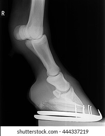 hores front right  leg xray picture.