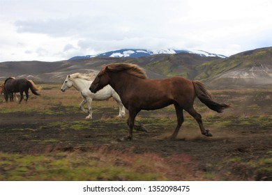 hores are running in nature
