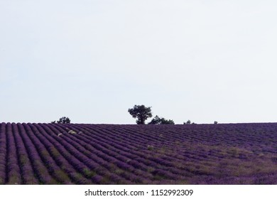Horizon of lavander