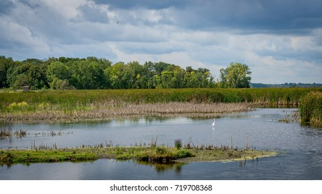 Horizon Marsh in Wisconsin - pond with trees and blue sky with crane in the water