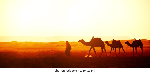 Horizontal banner with caravan of camels in Sahara desert, Morocco. Driver-berber with three camels dromedary on sunrise sky background