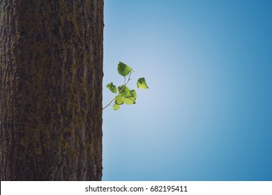 horizontal closeup of lonely branch with green leaves on tree trunk against blue sky