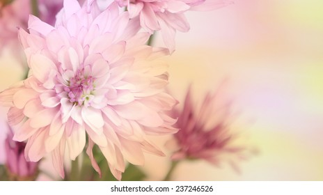 A horizontal format of flowers in a soft rainbow of colors.