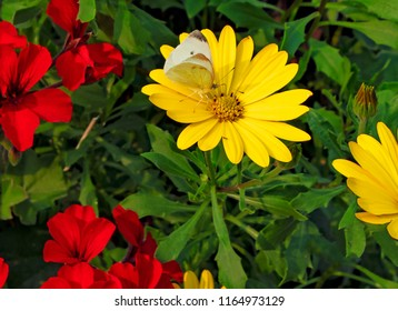Yellow flower with red center images stock photos vectors a horizontal frame of a bright yellow flower bloom among some red flowers and green leaves mightylinksfo