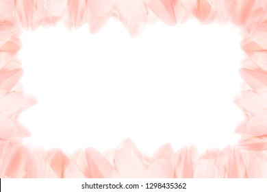 Horizontal frame of pink feathers. Isolated on white background