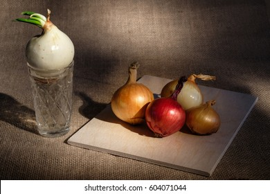 horizontal frame still-life group of onions different colored located on wooden board on burlap textured surface spot lighted and near board glass cup with water where growing onion with green stem