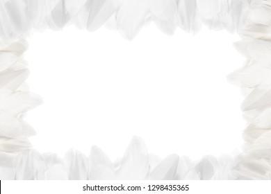 Horizontal frame of white feathers. Isolated on white background