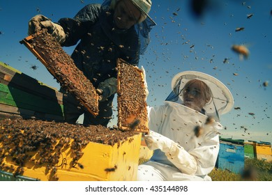 Horizontal front view of two beekeepers checking the honeycomb of a beehive with bees swarming around them