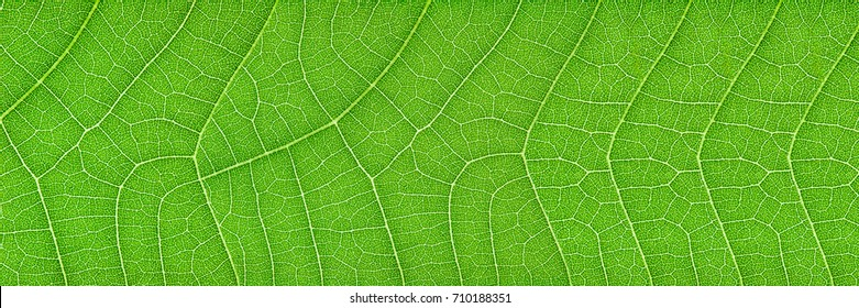 horizontal green leaf texture for pattern and background.