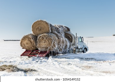 horizontal image of a big transport truck with round hay bales stacked on the flatbed waiting to be moved on a cold winter afternoon.