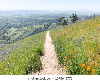 """A horizontal image of the California Super Bloom (""""Superbloom"""") featuring orange poppies and purple lupine wildflowers in the mountains of Southern California."""