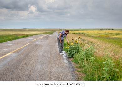 horizontal image of a caucasian woman picking flowers by the side of an old highway after  the rain with a dark cloudy sky in the summer time.