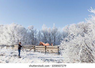 horizontal image of a caucasian woman taking pictures of her horses standing in the corral surrounded by snow and frost covered trees in the winter time.