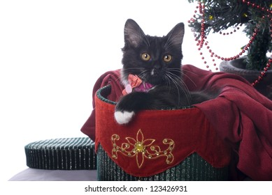 Horizontal image of a cute black kitten cuddled up in a red and green velvet Christmas gift box on a white background.