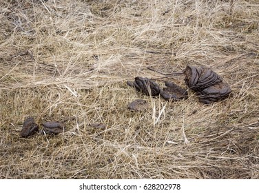 horizontal image of moose poop lying on the ground with a lot of hay lying around.