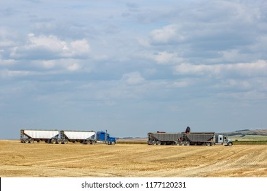 horizontal image of two semi trucks loading grain in the wheat field at harvest time under a blue sky in the summer time.