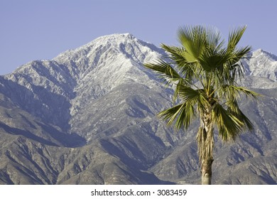 Horizontal landscape image of a snow capped mountain with a palm tree in the foreground