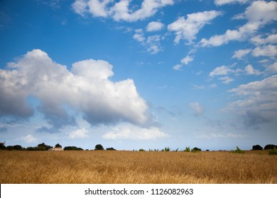 Horizontal landscape of a leafy meadow and an expressive blue sky with clouds