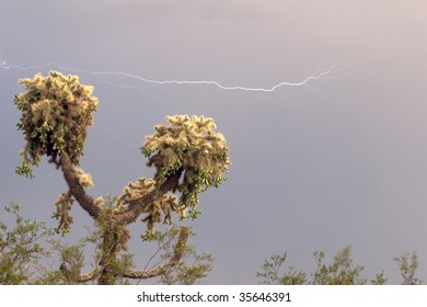 A horizontal lightning strike seen over a Jumping Cholla Cactus, with a well lit subject and background