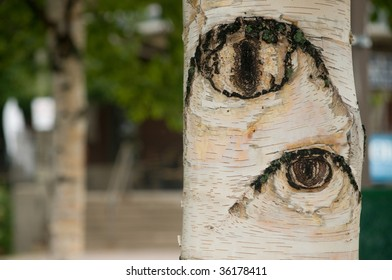 horizontal macro of Birch bark trunk which appears to have eyes looking out