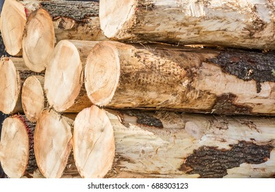 horizontal orientation color image close up of freshly cut logs waiting to be transported / Freshly Cut Logs - Horizontal Image