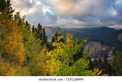horizontal orientation color image of trees changing color with evergreens and mountains, on a cloudy day