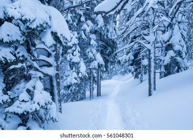 horizontal orientation monochromatic image in blue of a snowy trail leading through the forest, with deep snow / Trail through the Forest in Monochromatic Blue