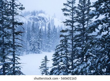horizontal orientation monochromatic image of mountainous terrain and forest in a snow storm with limited visibility, with blue tones / Mountainous Terrain in Monochrome (Blue)