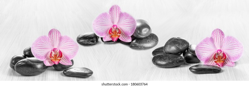 Horizontal panorama with pink orchids and zen stones on a wooden background