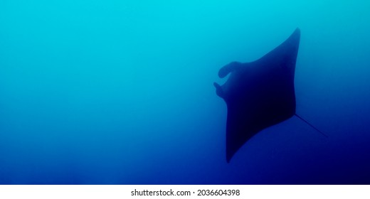 Horizontal panoramic of a manta ray silohuette in the Indian Ocean. Mobula birostris