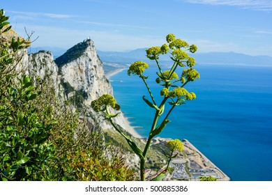 Horizontal, panoramic shot from the top of the Rock of Gibraltar. From this angle you can see the famous limestone ridge and coastline of Southern Spain. Gibraltar is a British overseas territory.