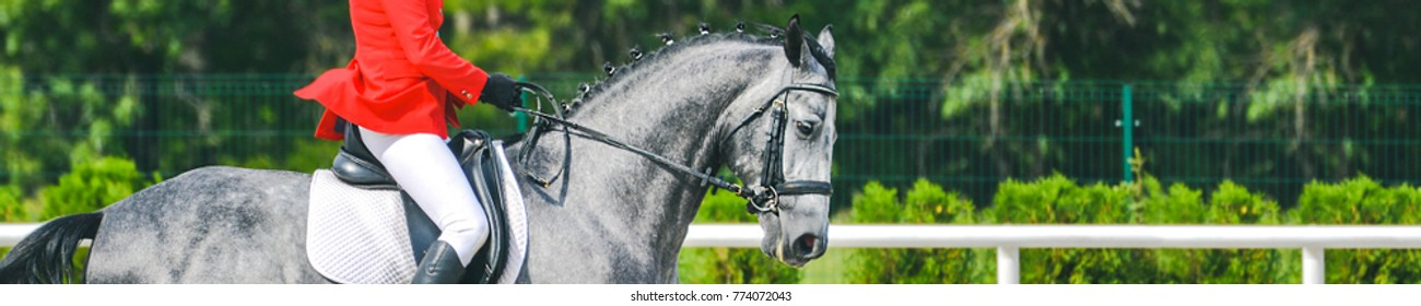 Horizontal photo banner for website header design. Dressage horse and rider in uniform during dressage competition. Copy space for your text.