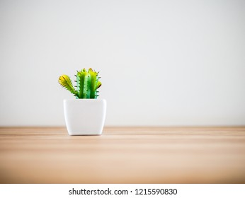 Horizontal photo of a green small plant in white pot succulents or cactus on wooden table in cafe or workplace at left of photo by front view, white wall background. Copy space concept.
