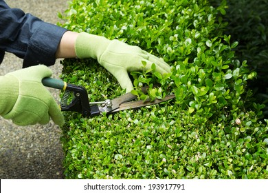 horizontal photo of hands wearing gloves trimming hedges with manual shears - Garden Mainenance