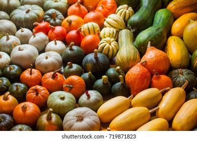 horizontal photo of heirloom different varieties squashes and pumpkins