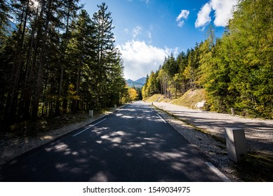 horizontal photo of road shaded by  alley of firs in bright summer day