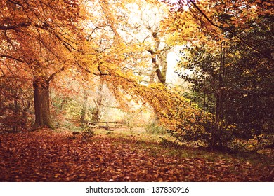 Horizontal picture of idyllic sunny autumn landscape in Dalkeith park.