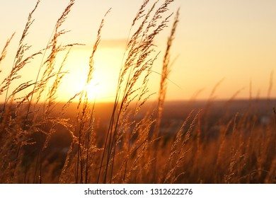 Horizontal Prairie Grass