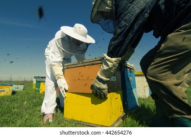 Horizontal rear view of two beekeepers working on the beehives with bees swarming around them