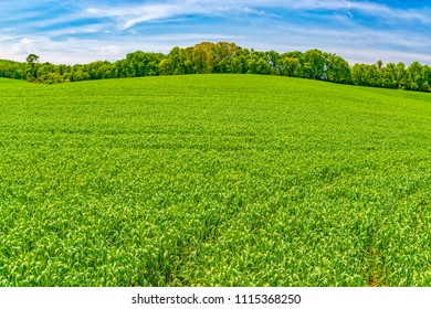 Horizontal shot of a bright green Spring field background with copy space.  Green trees line the back of the field under a blue sky with wisps of clouds.