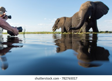 A horizontal, surface level, colour image of a group of tourists photographing two curious elephants, Loxodonta africana, from a boat in in Chobe National Park, Botswana.