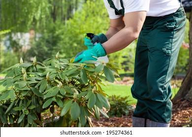 Horizontal view of a gardener spraying a plant