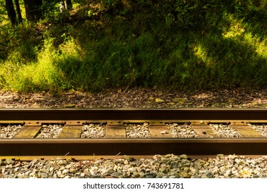 A horizontal view of a railroad track section in a deep woods with light and shadow