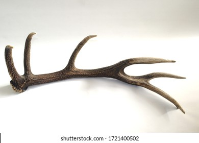 the horn of a deer on white background, texture of the horns