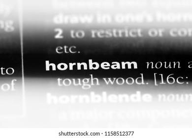hornbeam word in a dictionary. hornbeam concept.