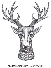 horned deer painted in the technique of engraving. Sketch for tattoo.