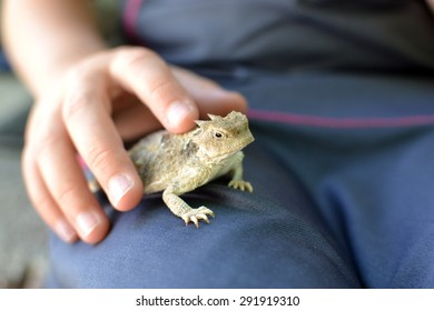 Horned frog aka horny toad being petted on the lap of a child