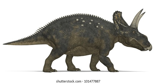 Horned Herbivorous dinosaur Triceratops
