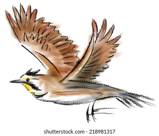Horned Lark in color